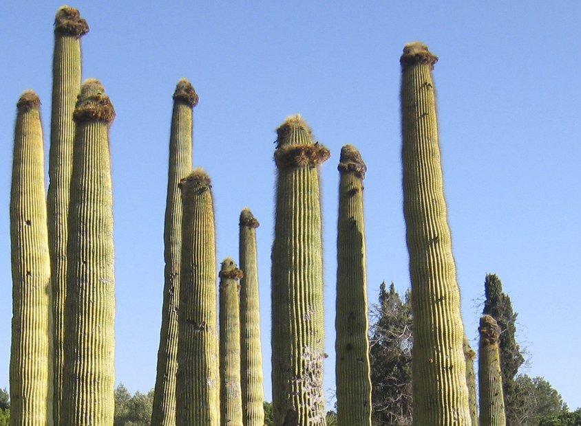 Jardin Tropical Pinya de Rosa