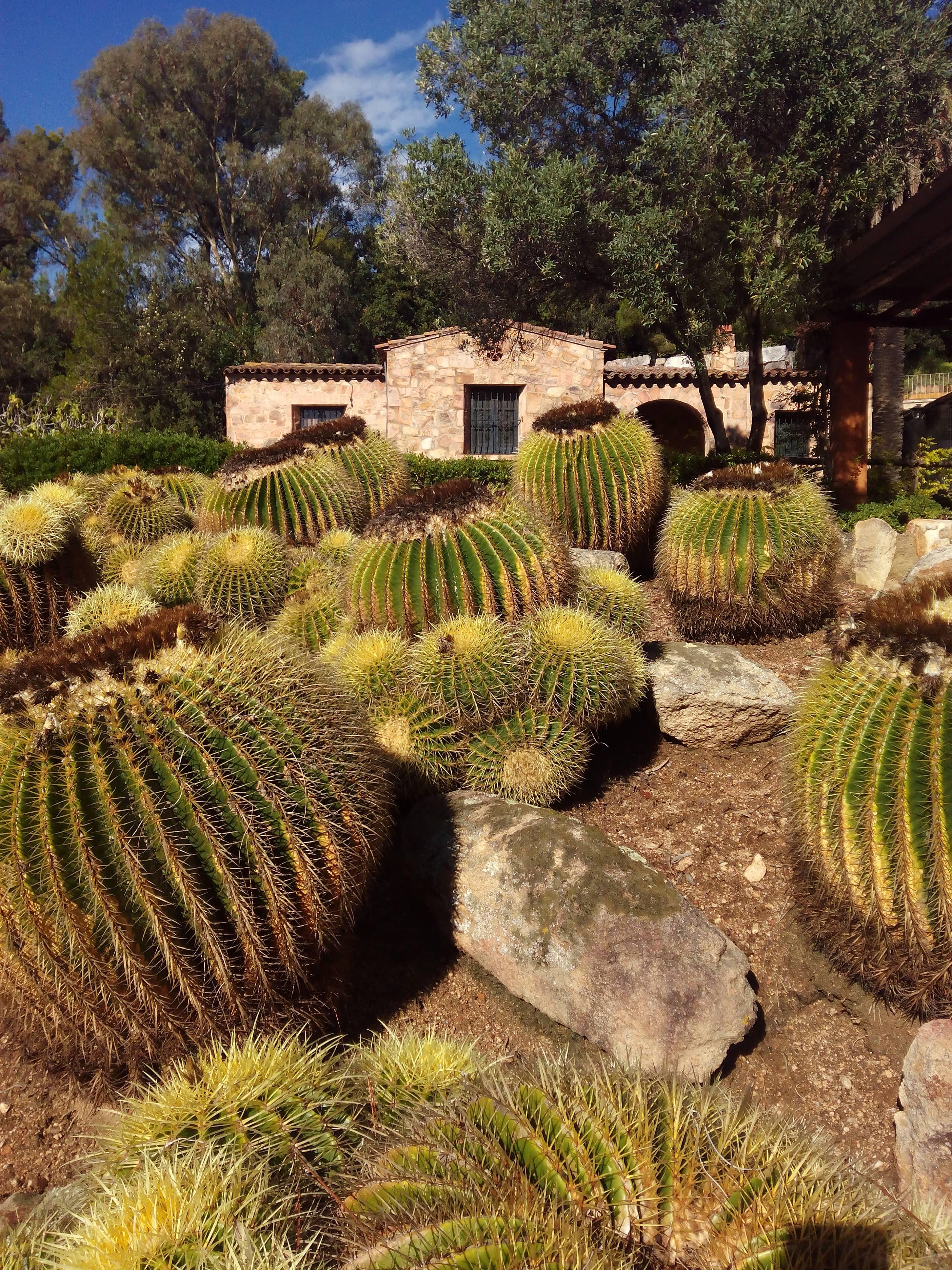 Pinya de Rosa Tropical Garden - Turisme Blanes