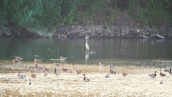 Día Mundial de las Aves'
